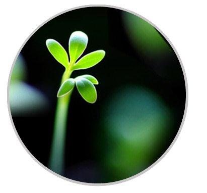Engagement - Greentech