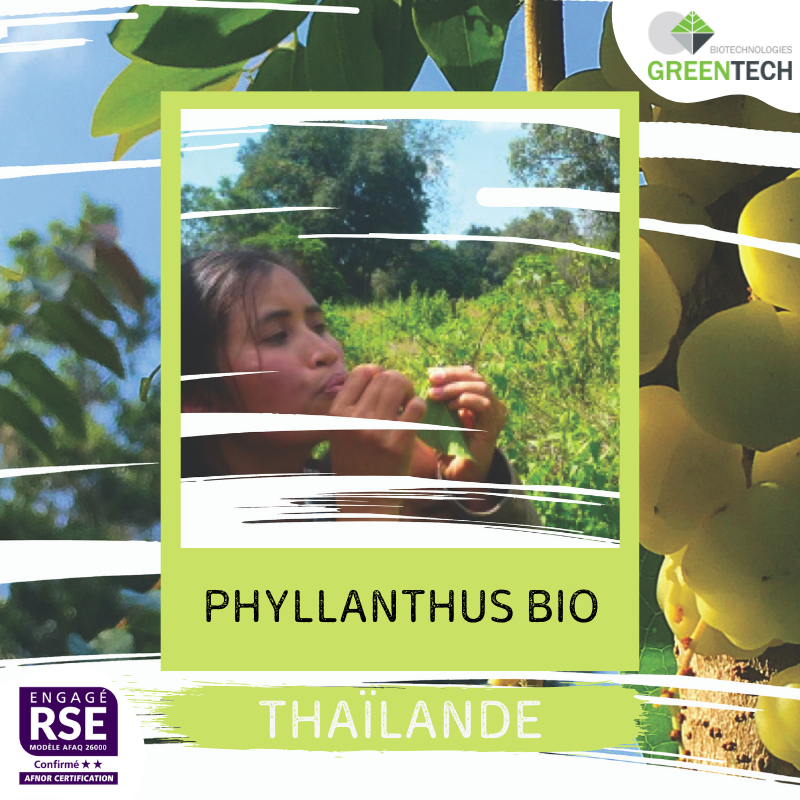 Our historical Supply Chains - #6 - Thailand: Phyllanthus BIO