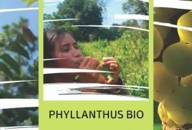 Nos filières historiques - #6 – Thaïlande : Phyllanthus BIO