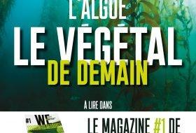 Magazine GREENTECH #1: L'algue, le végétal de demain